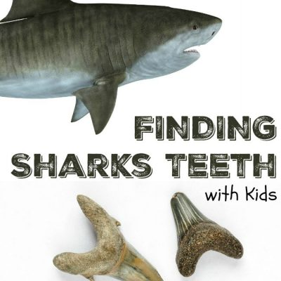 SHARK WEEK Learning Activities for Kids: Hunting for Sharks Teeth