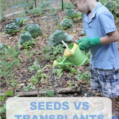 Gardening with Kids When to use Seeds vs Transplants