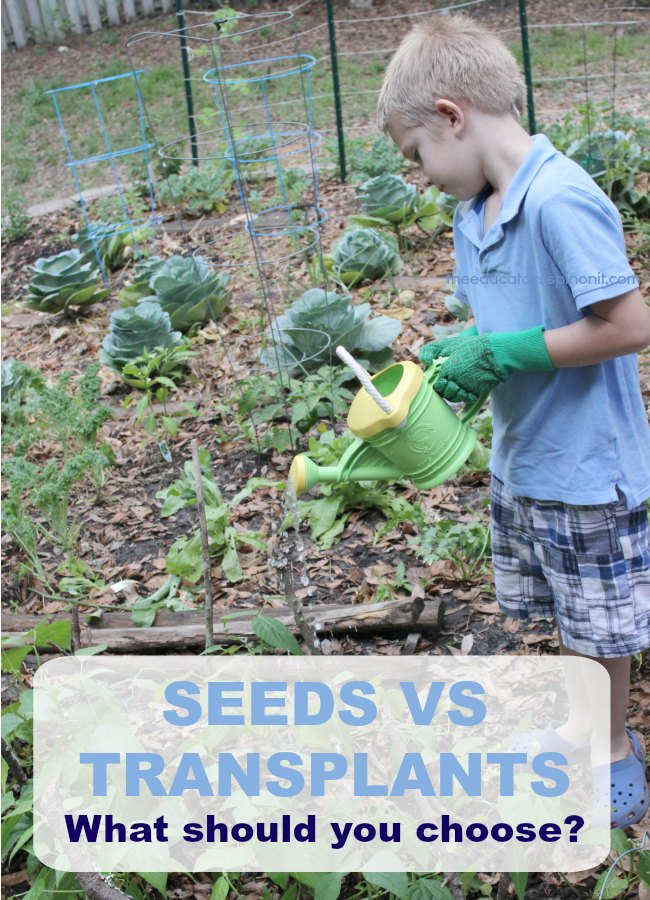 Seeds vs Transplants: What should you choose when gardening with kids?