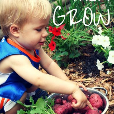Growing potatoes with Kids: a Backyard Gardening Activity