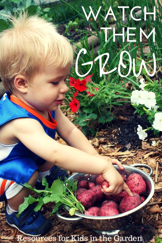 Growing Potatoes with kids, gardening kids