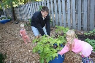 Growing potatoes with Kids, a Backyard Gardening Activity