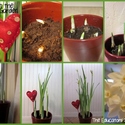 Kids in the Garden: The Indoor Garden