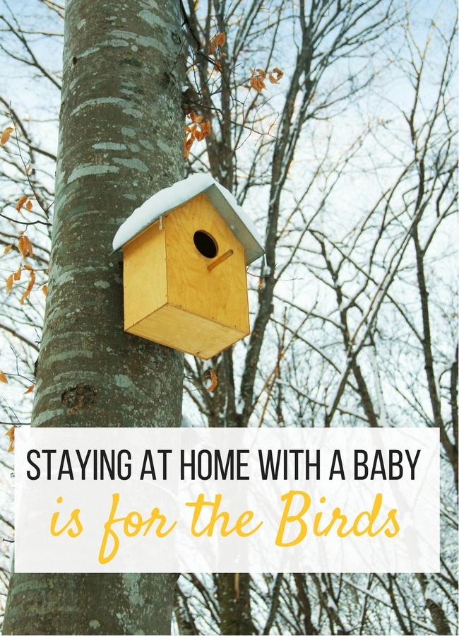 Staying at Home with a Baby is for the birds. It's not what you think, here's why