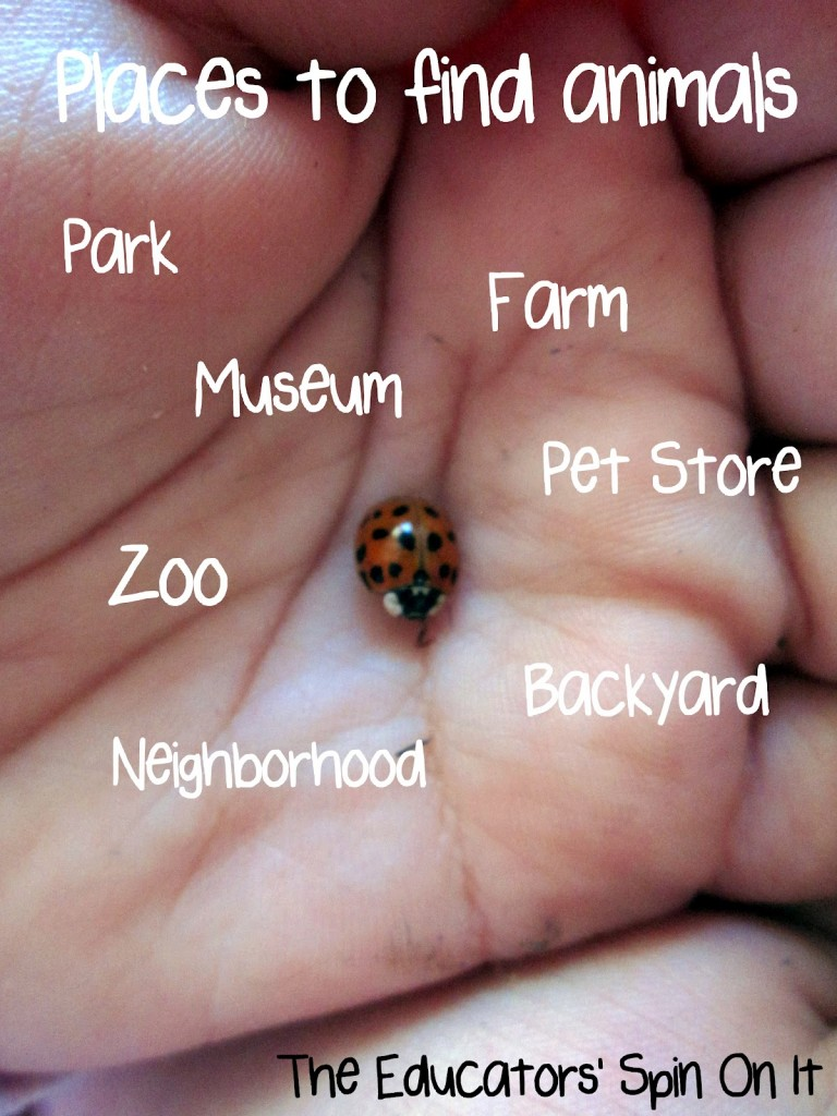 places to observe animals with babies and toddlers