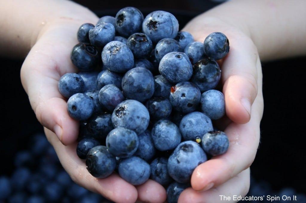 Blueberries in child's hands