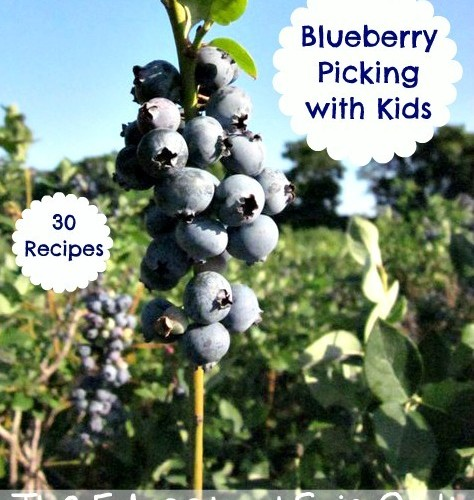 Bluebery Picking with Kids and Recipes