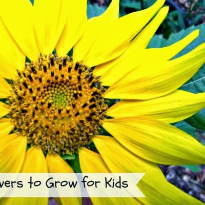 Gardening with kids and the flowers we plant