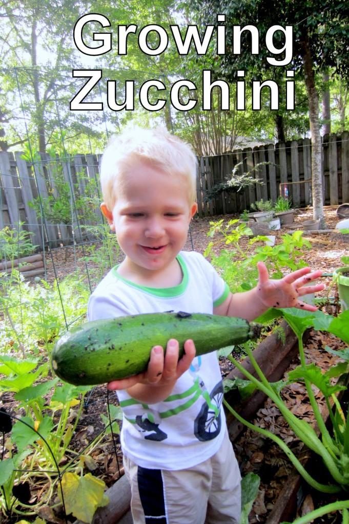 Growing Zucchini with Kids in Backyard Garden