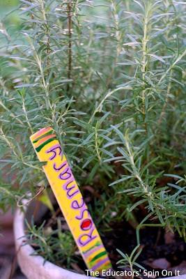Creating an edible sensory garden for children with herbs