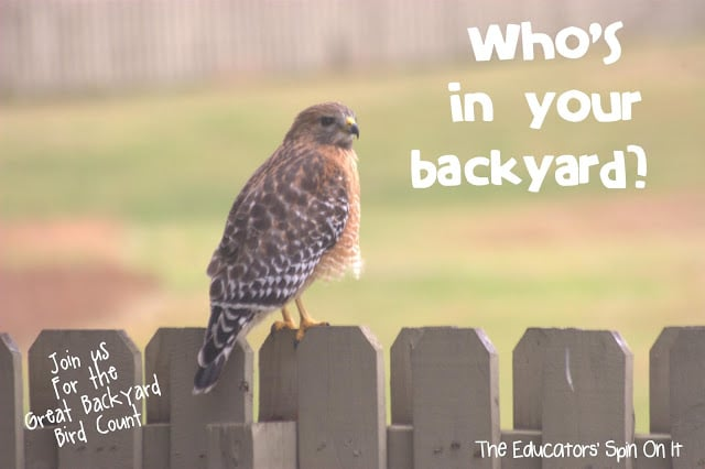 the great backyard bird count the educators 39 spin on it