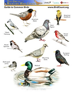 10 Common Birds Poster From Bird Count.Org