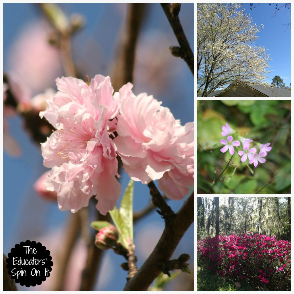 spring flowers on trees and bushes to discover during spring walk