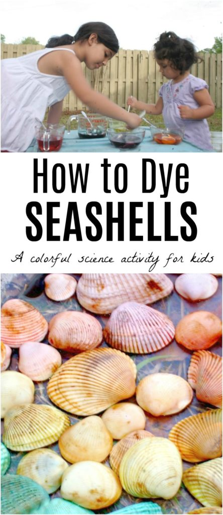 How to Dye seashells with kids. A science lesson with vinegar and egg dye or food coloring that creates rainbow seashells.