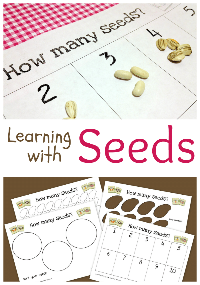 Printable Seed Activities Inspired by The Tiny Seed by Eric Carle – The Tiny Seed Worksheets