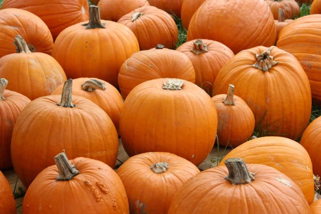 Pumpkins at pumpkin patch for baby activities this fall