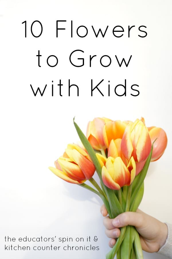 Tulip Flowers with yellow and orange held by child's hand.