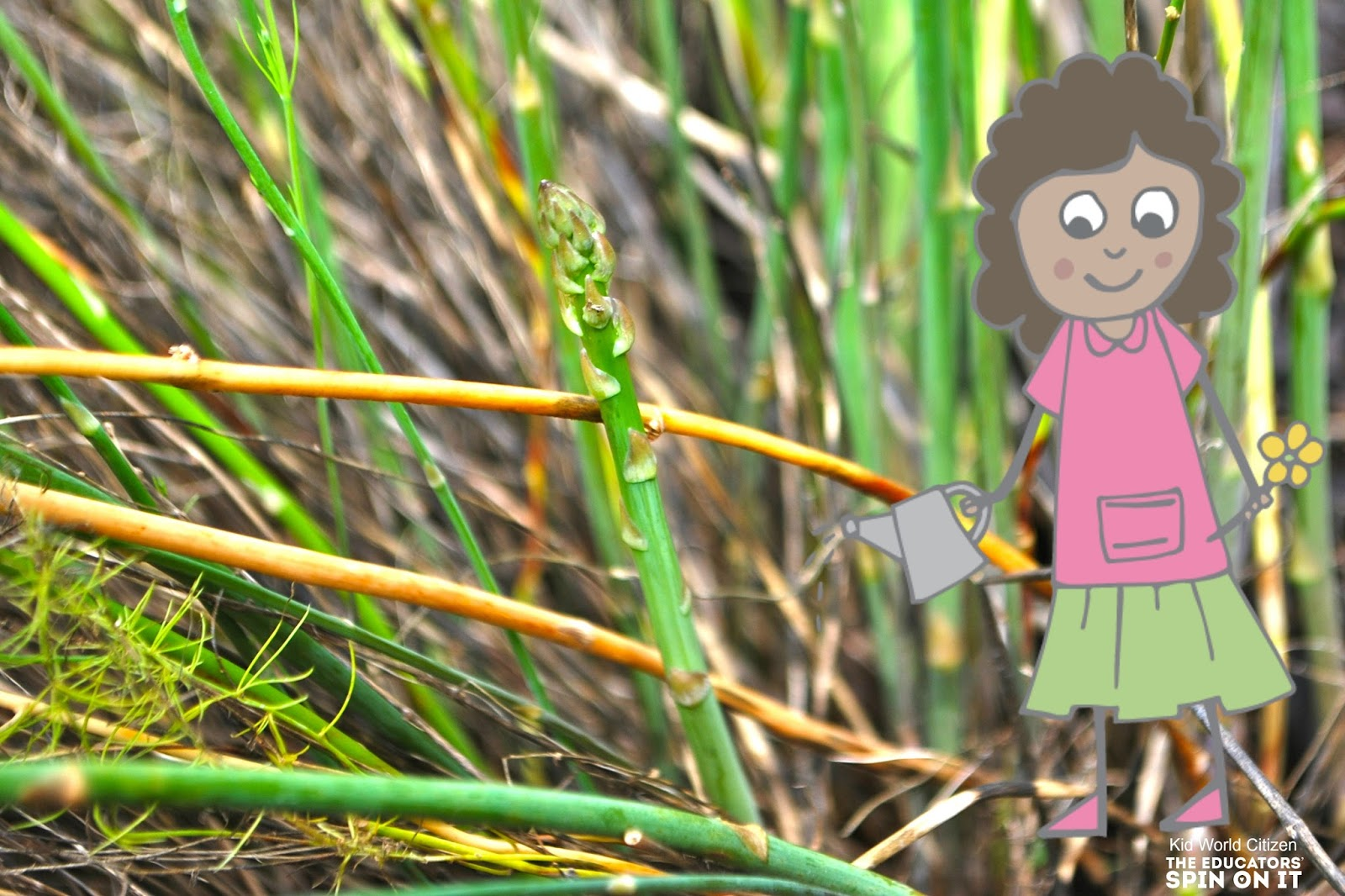 Asparugus is an easy vegetable for kids to help harvest and prepare for dinnertime