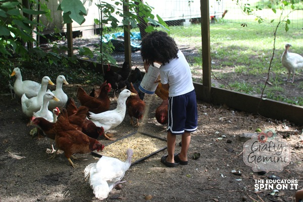 preschool homsteading chores, feeding the birds