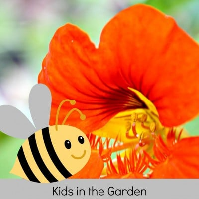 Garden Science: Learning about Bees in the Garden