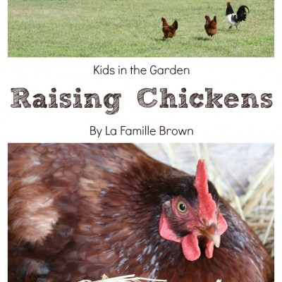 Raising Chickens: Homesteading with Kids
