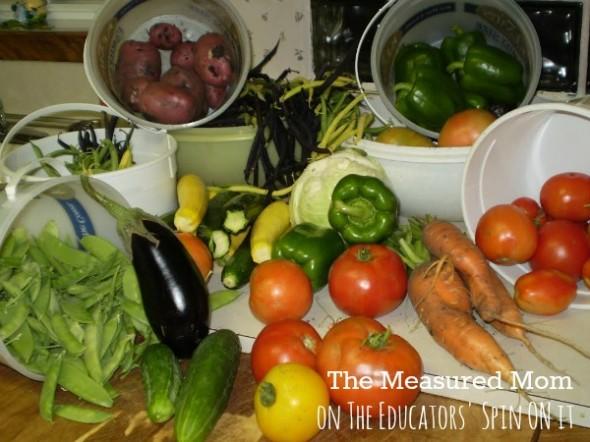 family garden (1) - the educators' spin on it