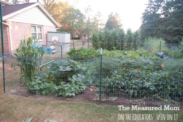 family garden (2) - the educators' spin on it