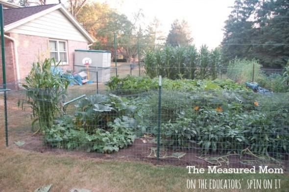family garden (2) - the educators' spin on it