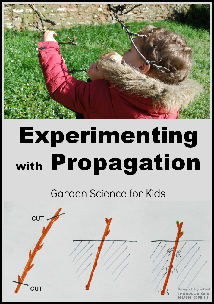 experimenting with propagation, garden science projects for kids