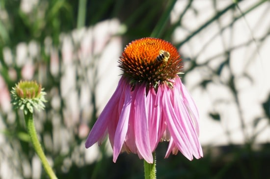 gardening cone flower with kids