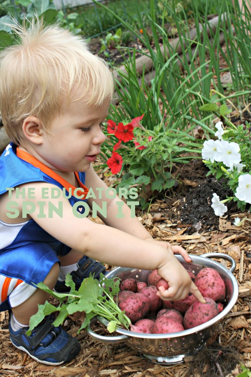 Kids Harvesting Potatoes from the Garden #gardeningwithkids