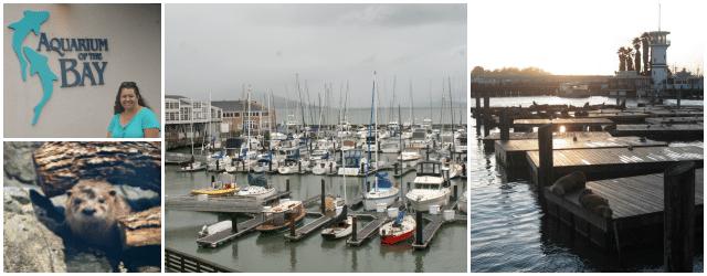 Visit Pier 39 in in Fishermann's Wharf in San Francisco