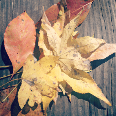 Teachable Moments in Autumn with Kids