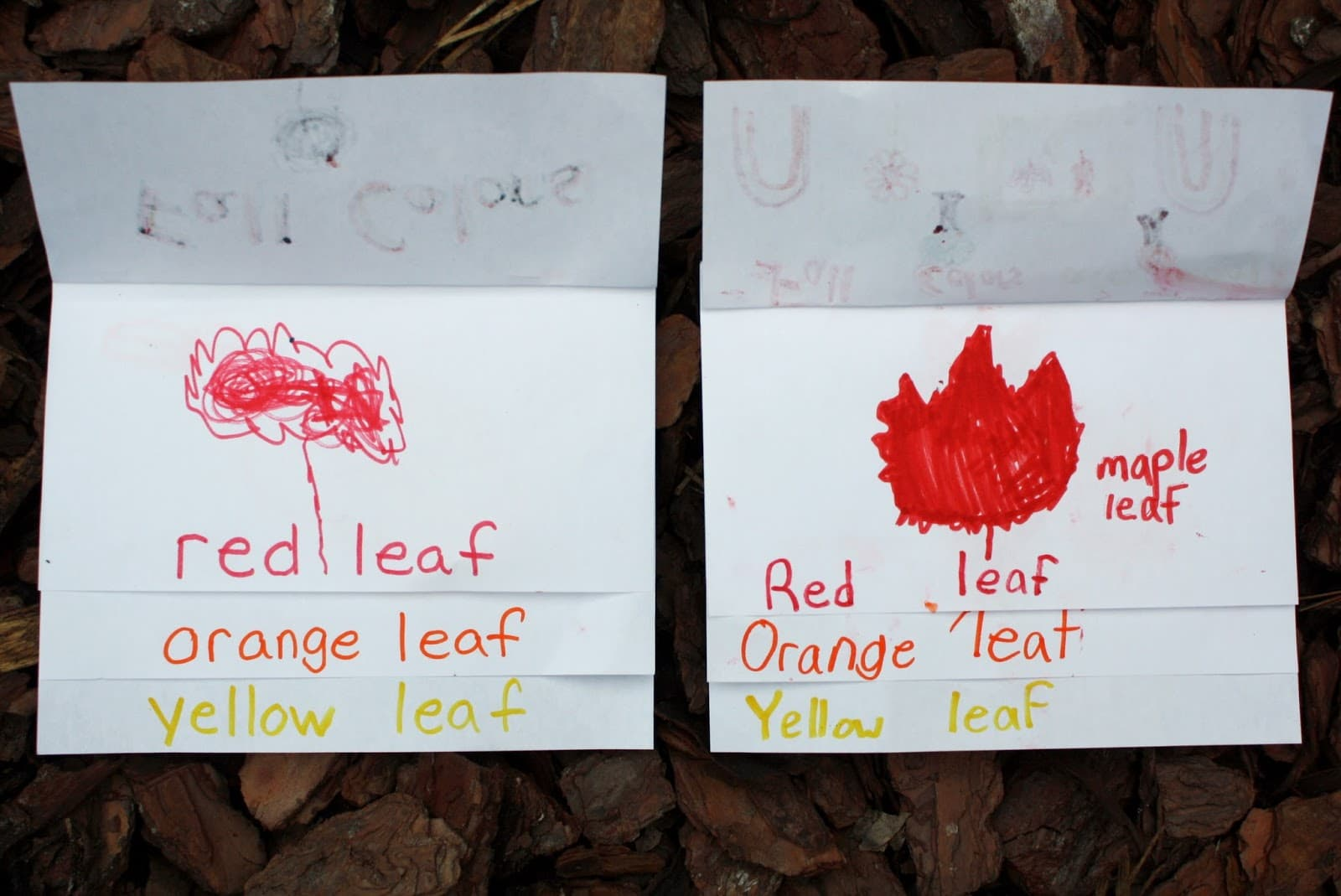 Red leaf page in the fall color flip book