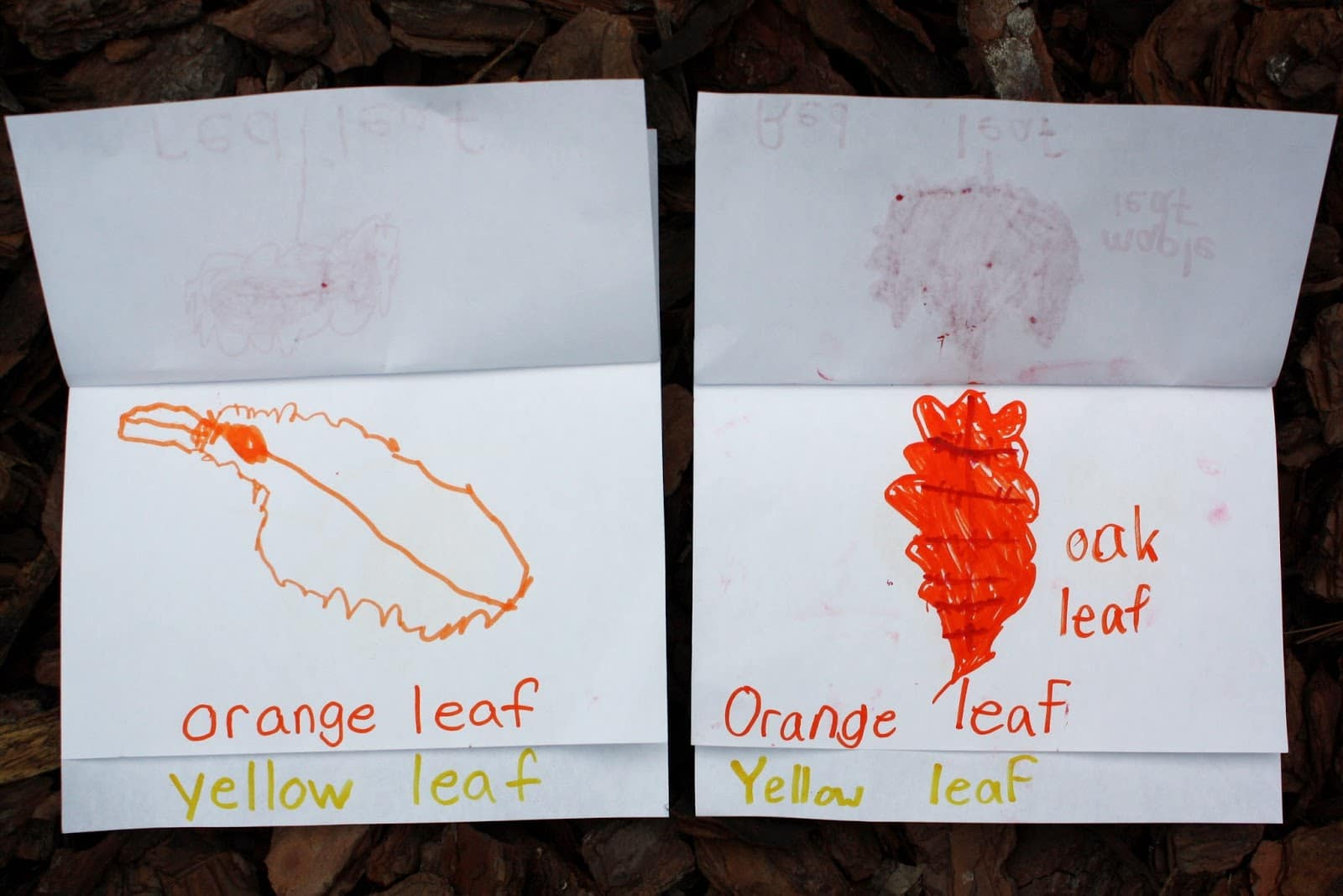 Orange leaf page in the fall color flip book