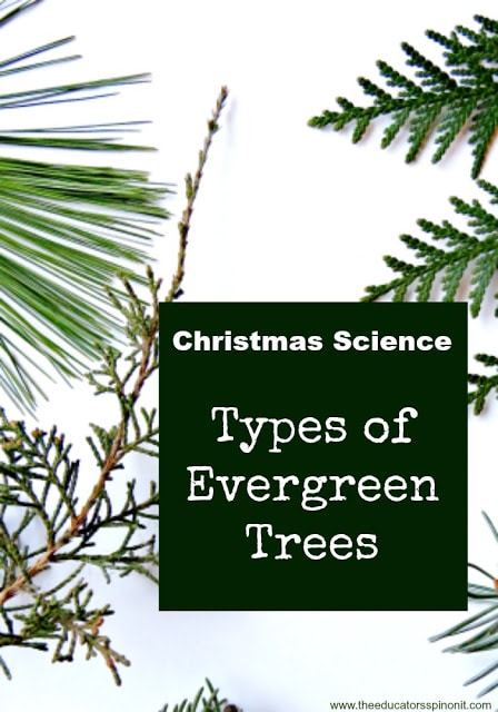 types of evergreen trees the educators 39 spin on it
