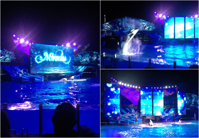 Shamu Miracles show a part of SeaWorld's Christmas Celebration with a family a 4. A must-do experience for the holiday season!