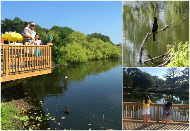 Exploring Florida Wildlife in St. Augustine KOA