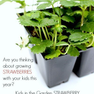 Strawberry STEM Challange : Growing Strawberries with Kids in the Garden