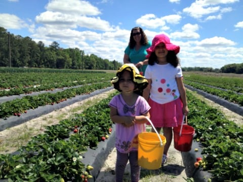 girls picking strawberries