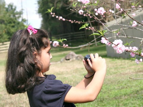 small girl taking picture of flowers