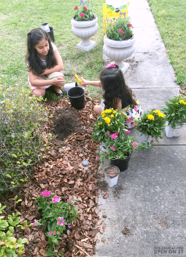 Planting Flowers for Butterfly Garden
