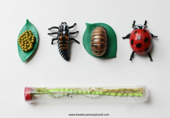 Lady BUg Larvae science experiment for kids
