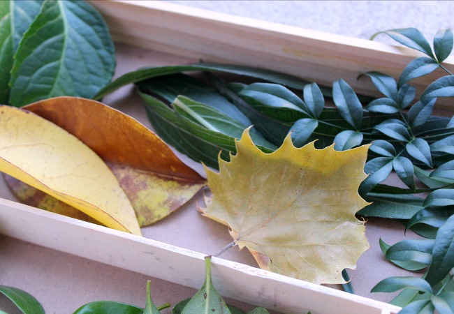 leaves for fall play with kids