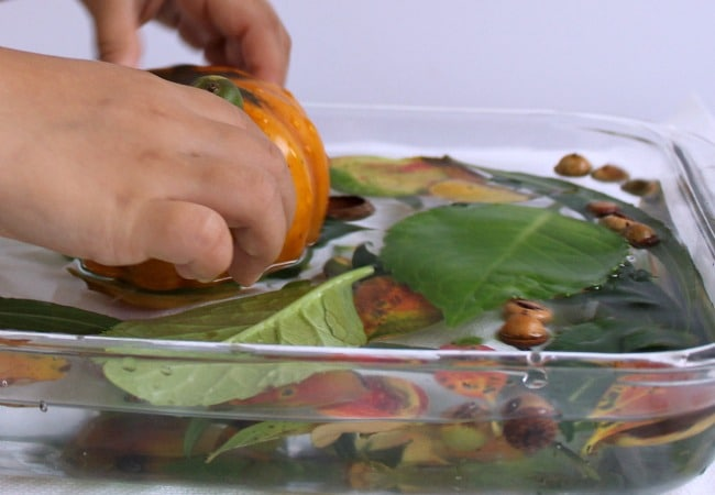 Play with Pumpkins in Water with Kids