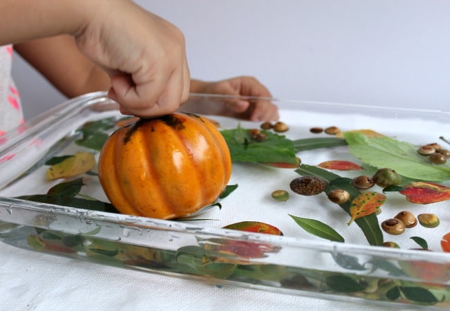 Sensory Play with Pumpkins and Water