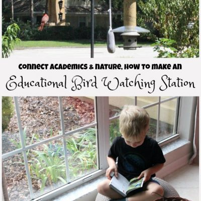How to Set Up a Bird Watching Station for Kids