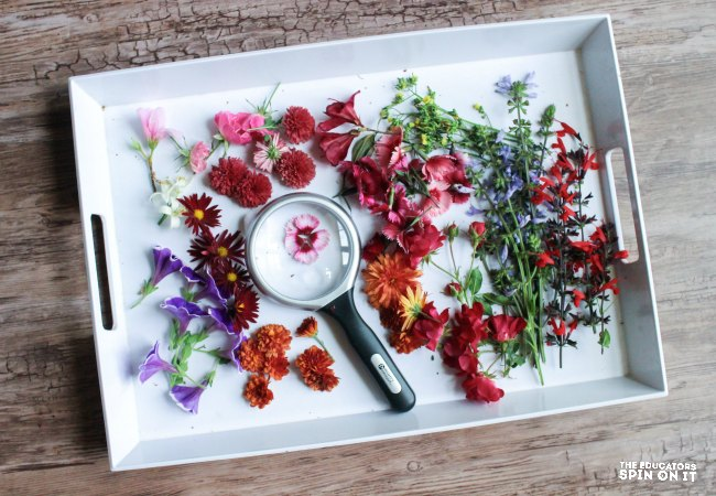 Create Flower Trays for Sensory Exploration