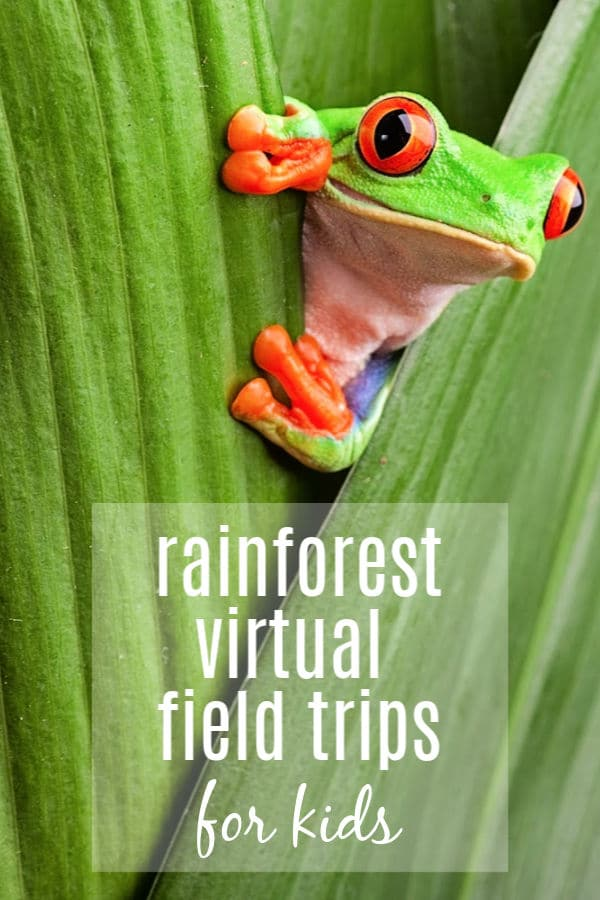 frog sitting on leaf featuring rainforest virtual field trips for kids