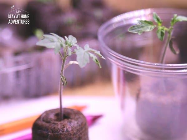 Seeding starting to grow